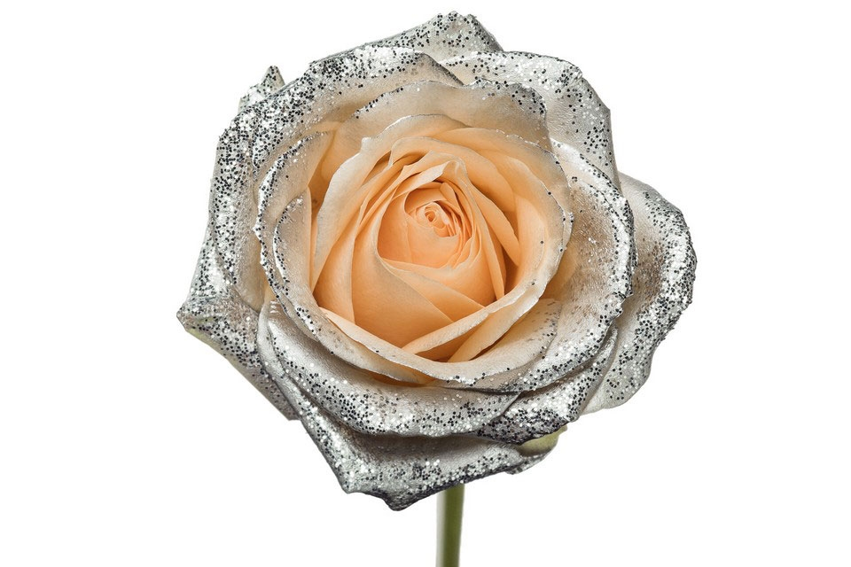 Bouquet of long peach Roses big flowers and silver sparkles