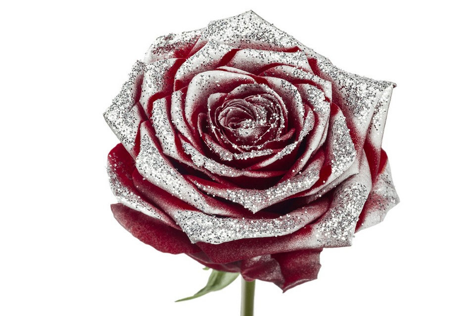 Bouquet of long red Roses big flowers and silver sparkles