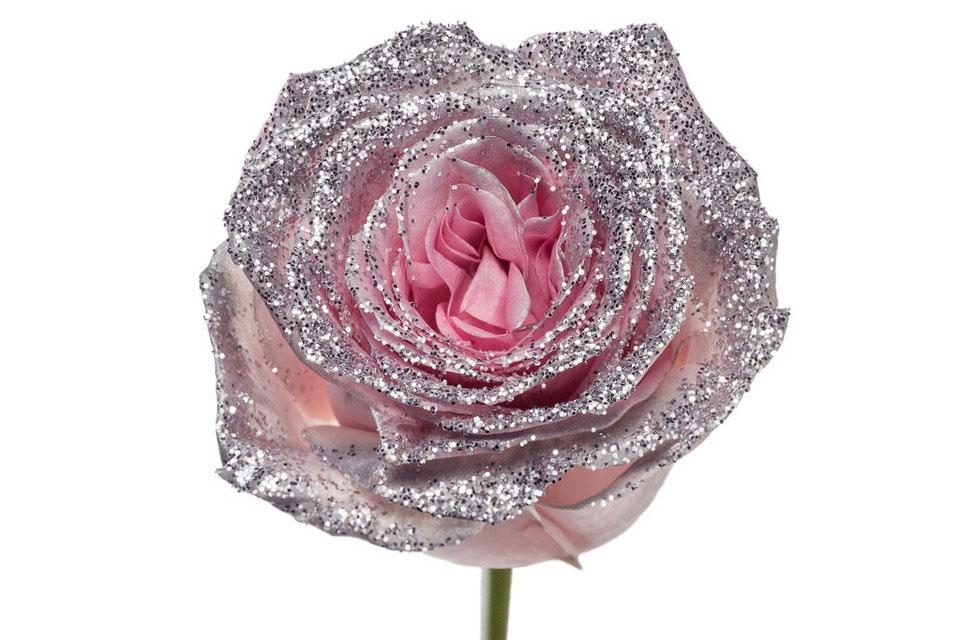 Roses longues tiges à gros boutons rose paillettes argentée