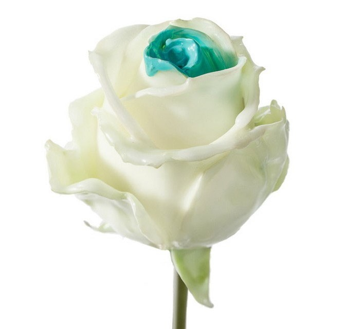 Bouquet of long white waxed Roses with a blue core