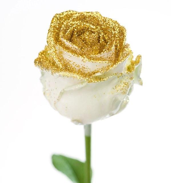 Roses longues tiges gros boutons ciré blanc paillettes dorée