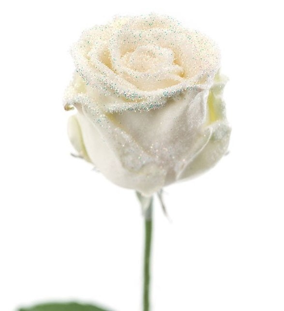 Bouquet of long white waxed Roses big flowers snowy