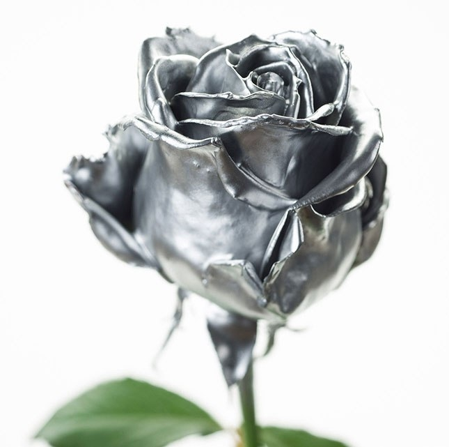 Bouquet of long silver colored waxed Roses with big heads