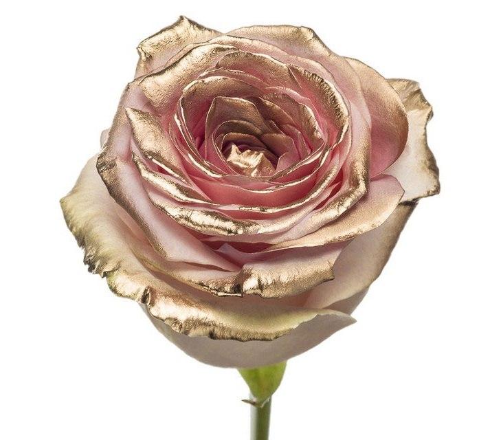 Roses à longue tiges à gros boutons rose et teint dorée