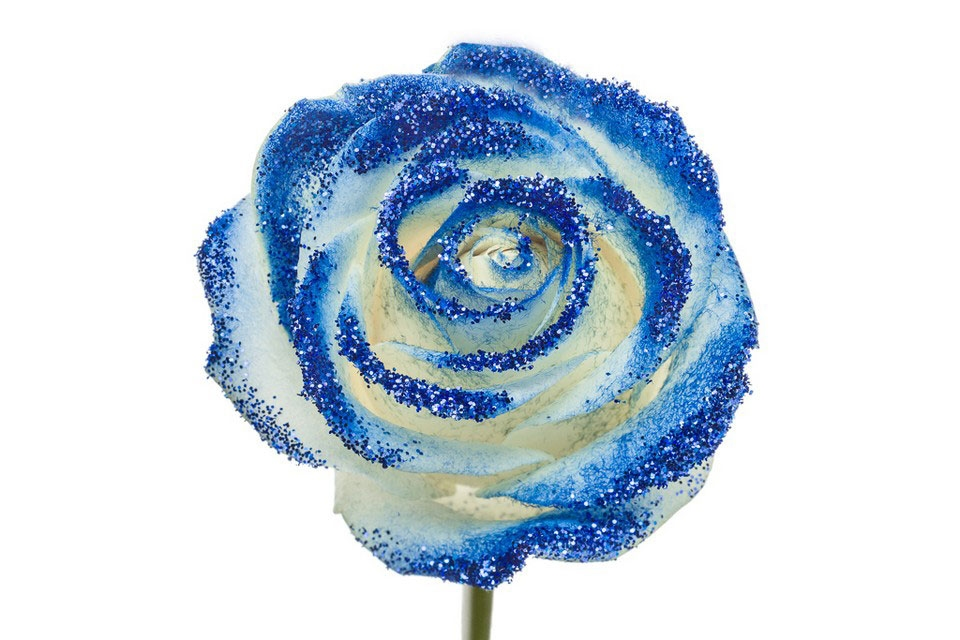 Bouquet of long white Roses big flowers and blue sparkles
