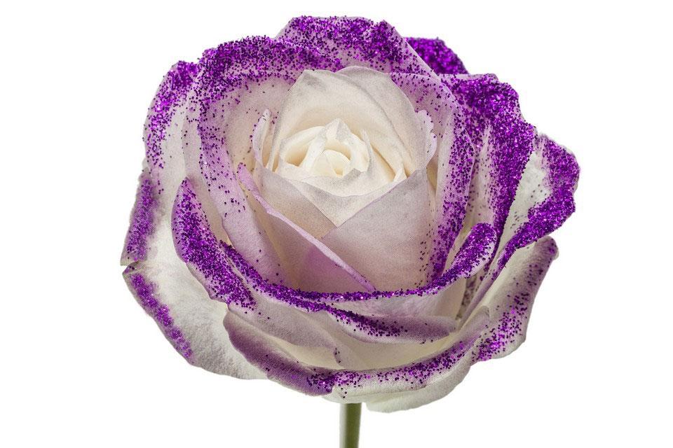 Roses à longue tiges gros boutons blanc et paillettes mauves