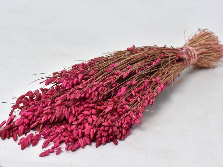 Briza Maxima roze 100 gram