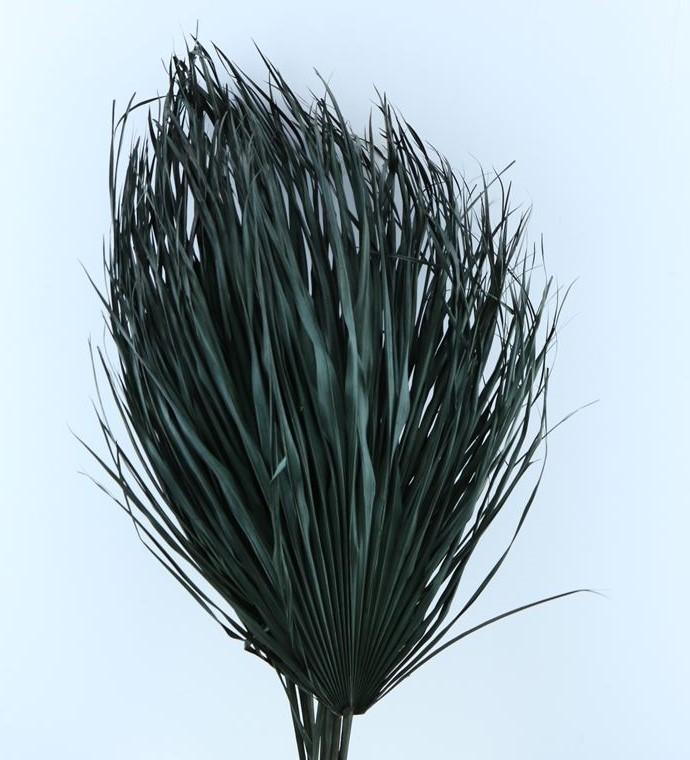 Chamaerops bladeren large zwart gedroogd