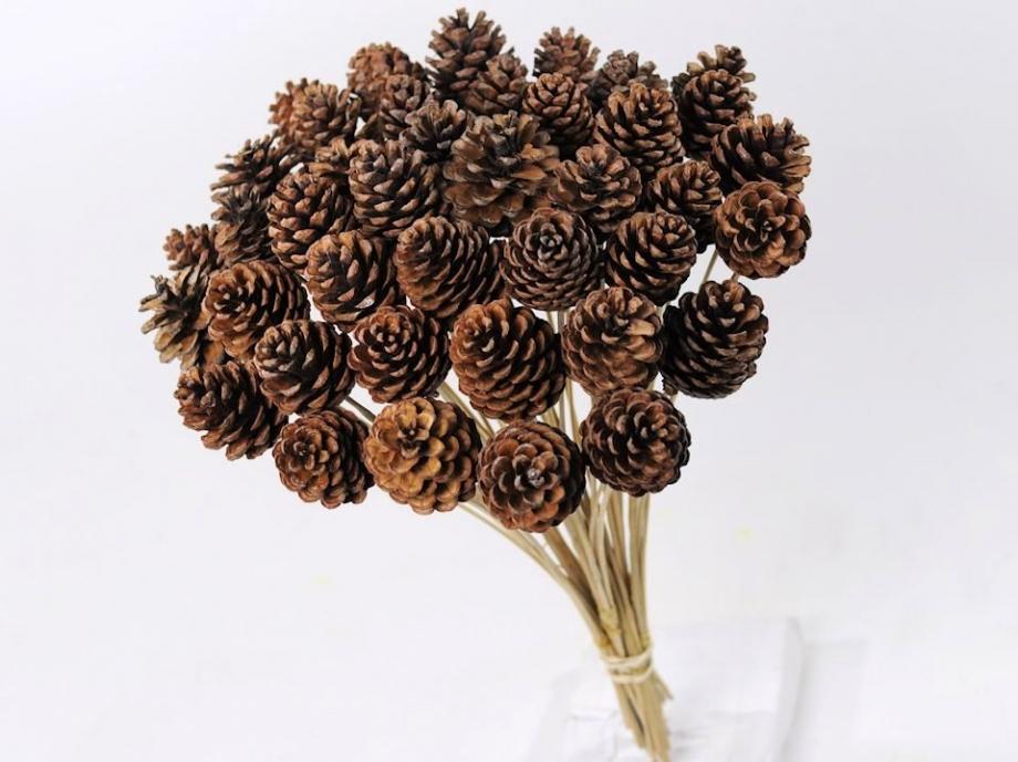 Pine Cone on stem
