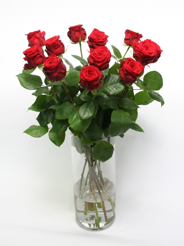 A dozen large-flowered red Roses
