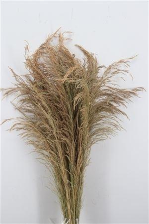Erba grass dried